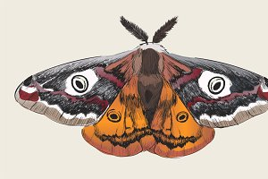 Illustration drawing of butterfly