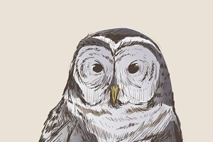 Illustration drawing of owl