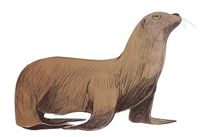 Illustration drawing of animal