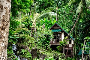 house in tropical forest in Thailand