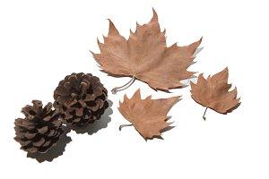 Autumn background isolated