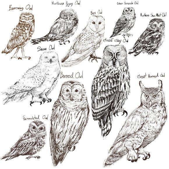 Birds collection vector