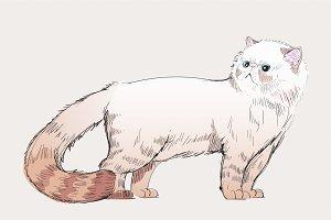 Illustration drawing of cat