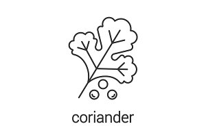 Coriander linear icon