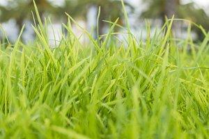 Green grass.