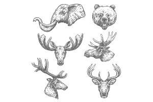 Animal sketch set of african and forest mammal