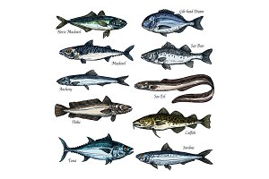 Fish, seafood sketch set with sea, ocean animal