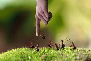 hand and a lot of ants