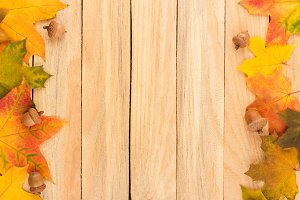 Colored maple leaves and acorns on the light wooden boards
