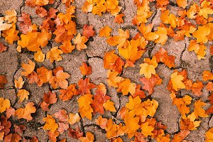 Golden Fall Cobblestone Leaves