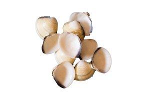 Several seashells