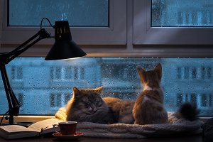 Rainy evening