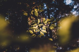 Leaves in the Forest at Sunset