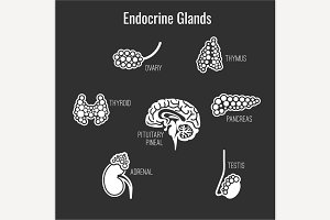 Endocrine Glands Icons