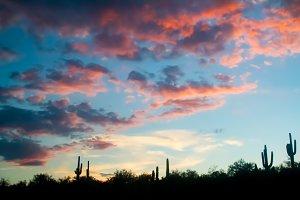 Desert Landscape Cactus Sunset