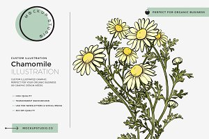 Chamomile Custom Illustration