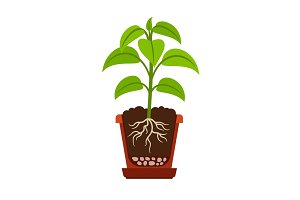 Houseplant with roots icon