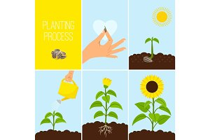 Flower planting process