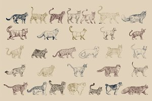 Cat breeds collection vector
