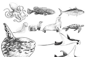 Illustration drawing of marine life