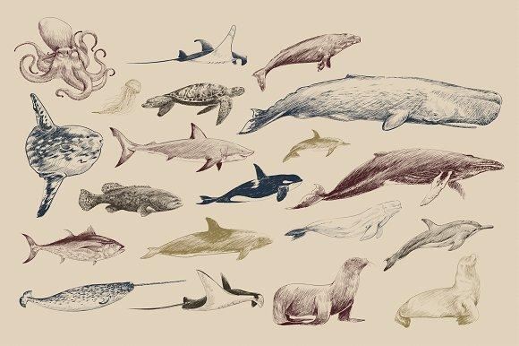 Marine Life Collection