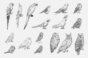 Parrot birds collection vector