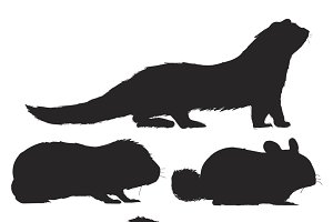Rat collection vector