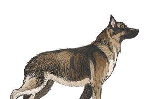 Animals Illustration Vector