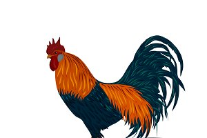 rooster, vector illustration