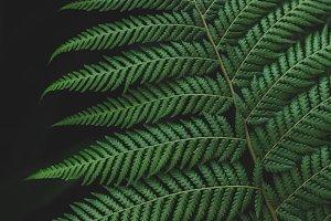 Forest Fern Foliage