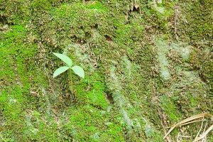 Small plants.
