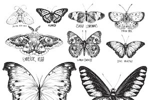 Illustration drawing of butterflies