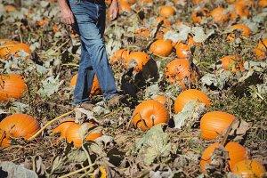 Low section farmer walking in pumpkin field