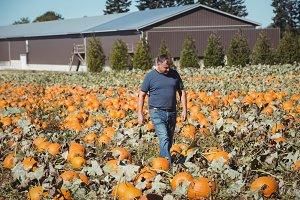 Farmer walking in pumpkin field
