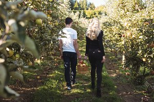 Couple holding hands and walking in apple orchard