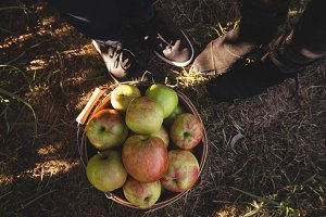Low section of couple with bucket full of apples