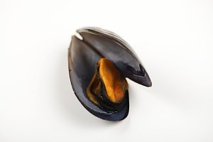Mussel on white background.