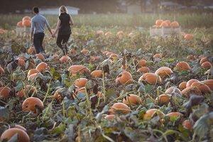 Couple walking in pumpkin field