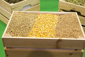 Corn and grain exposed in a wooden box.