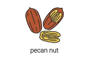 Pecan nut color icon