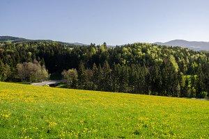Bärenschützklamm Nature Photo Pack