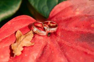 Wedding rings on autumn foliage background