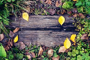 A beautiful wooden background, a leaf of a yellow green autumn day in nature, a cracked plank on the ground. Texture background for writing text. The concept of autumn nature.