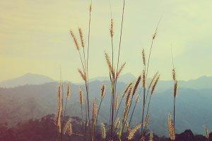 Close up of golden grass field