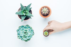 Set of cacti and succulents