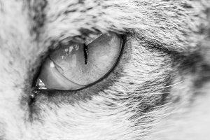 Eye Slit