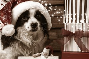 Christmas postcard, cute dog.
