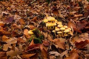 Mushroom. Autumn forest