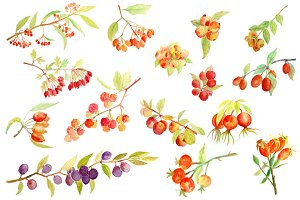 Watercolor Autumn Berry Fall Berry
