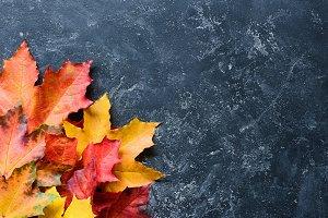 Maple leaf frame on stone background